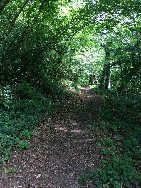 Path in Midger Wood