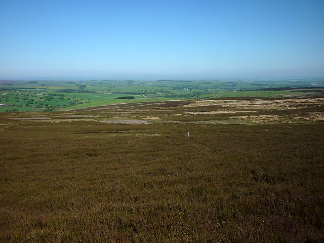 Heather moor, Burntshieldhaugh Fell