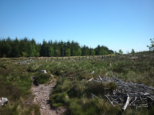 Footpath into Slaley Forest