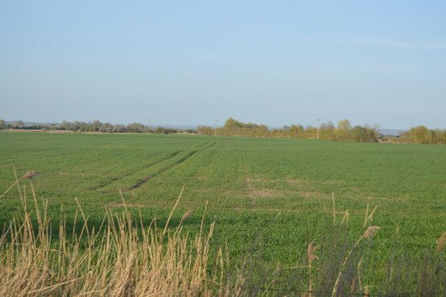 Field by B2080