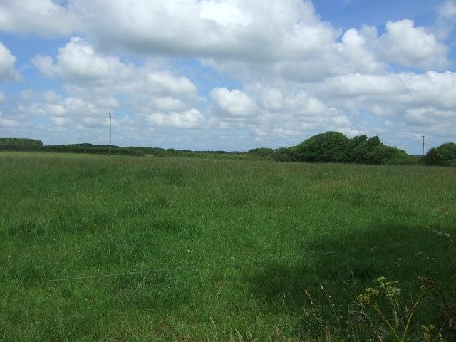 Grassland, Tresaddern Farm