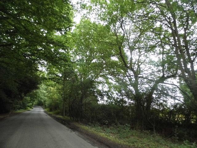 Puddephat's Lane near Jockey End