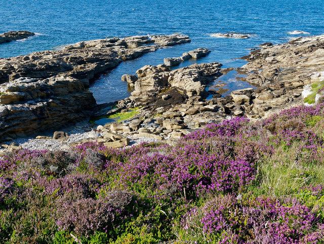 Heather and coast of Tarbat Ness