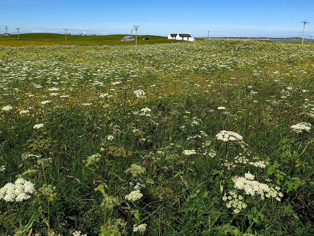 Flower-rich meadow at Gott