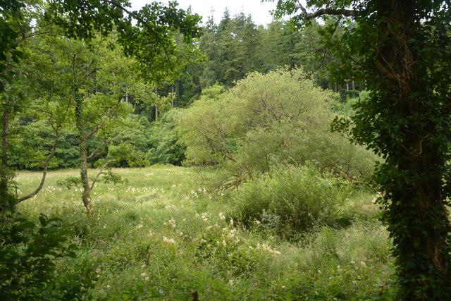 Cornwall : Grassland