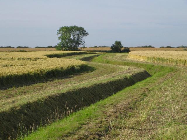 Land drain near Patrington