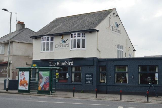 The Bluebird