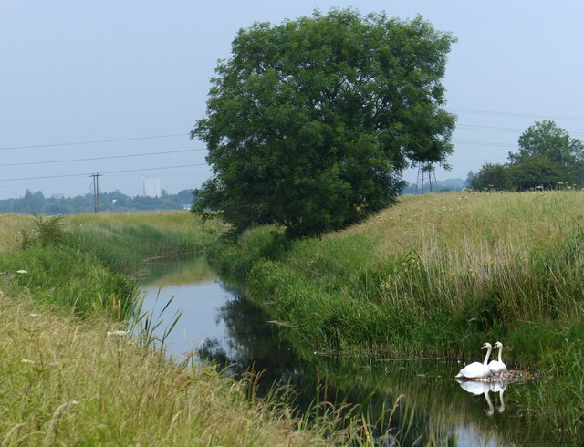 Nesting swans on the River Nar