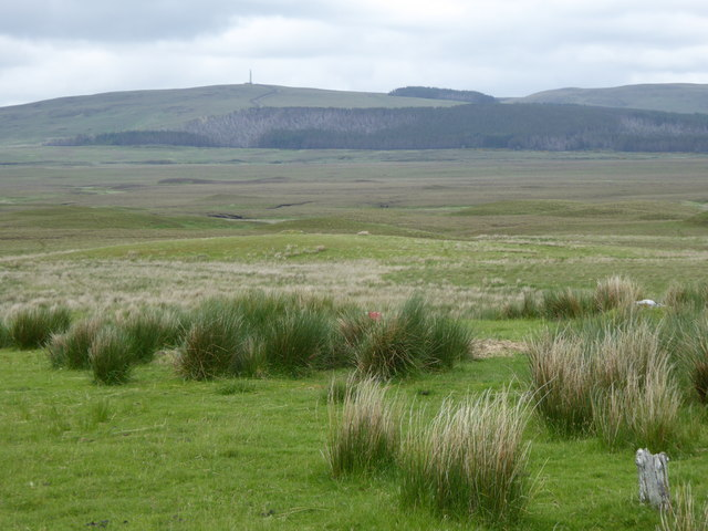 Rushy grasslands by the Greamachary track