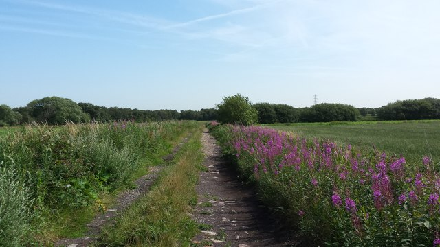 The track to Moss Heath