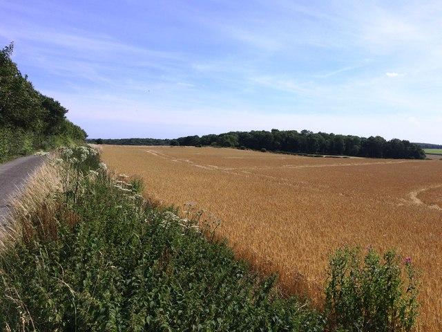Crop Field off First Lane