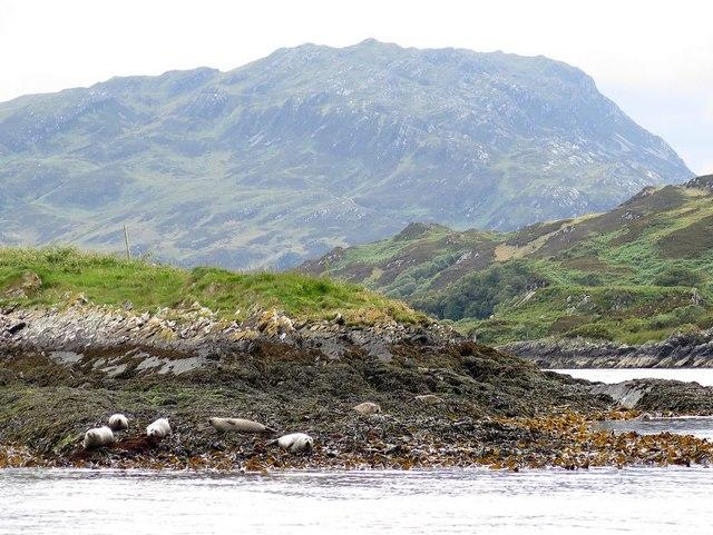 Seals on Eilean nan Ceann and Lunga