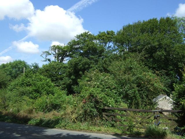 Woodland, Rosevear