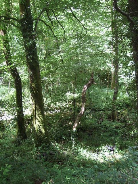 Woodland near Mawgan