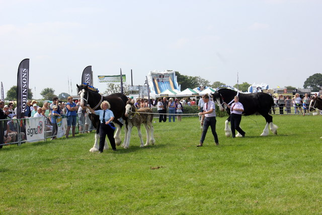 Shire Horse Display at the Royal Cheshire County Show 2017