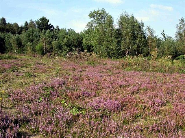 Heathland in Footland Wood