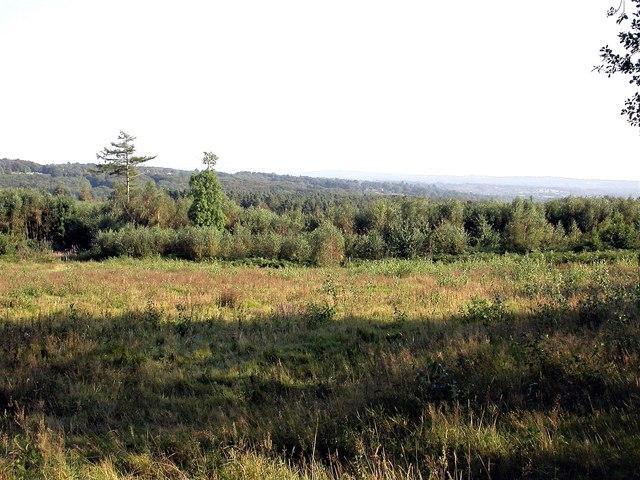 Grass heath in Footland Wood