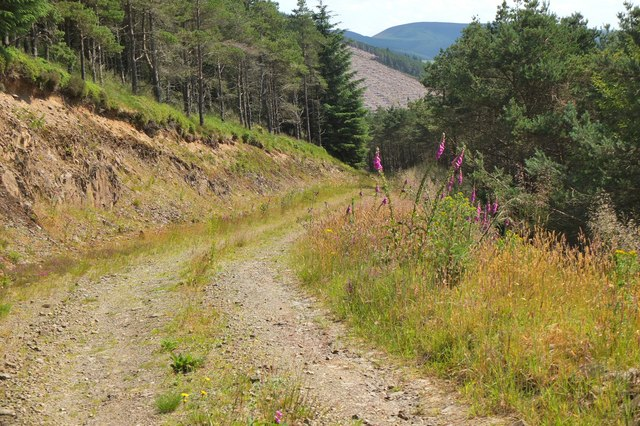 Forest track above Hunter's Knowe