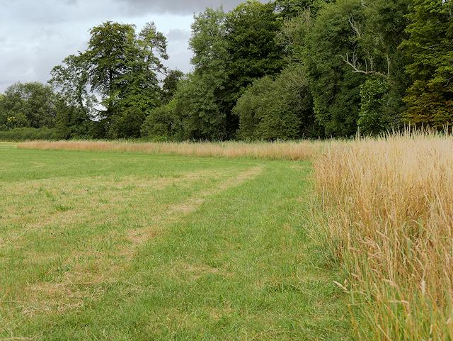 Meadow, Mottisfont Estate