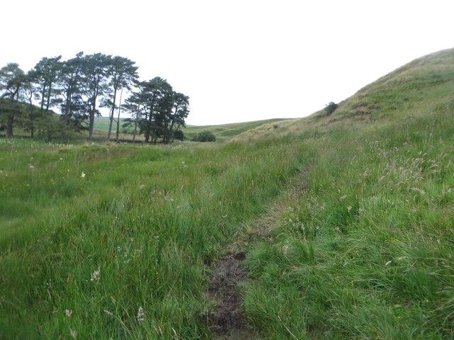 Footpath crossing grassland