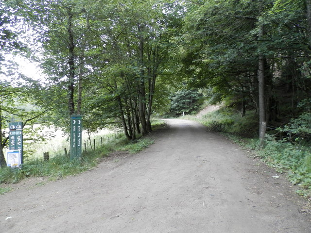 Forest track near Glen Doll Lodge