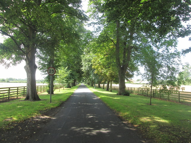 Avenue from The Hawkhills towards the main road