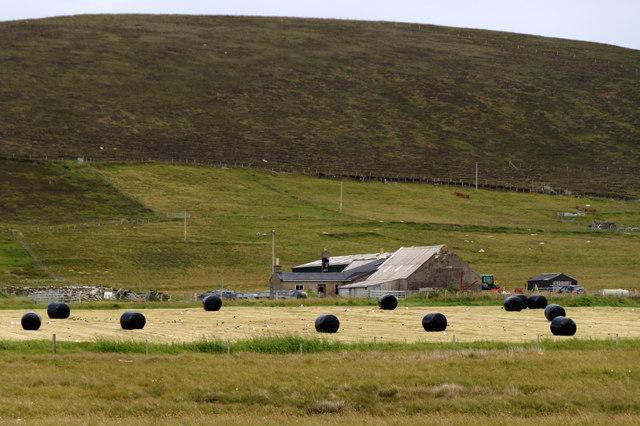 Silage bales at Ungirsta, Haroldswick