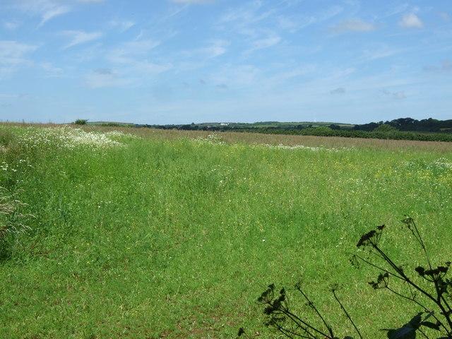 Grassland, Naphene Downs