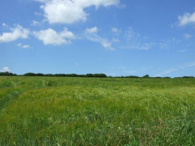 Cereal crop, Helland