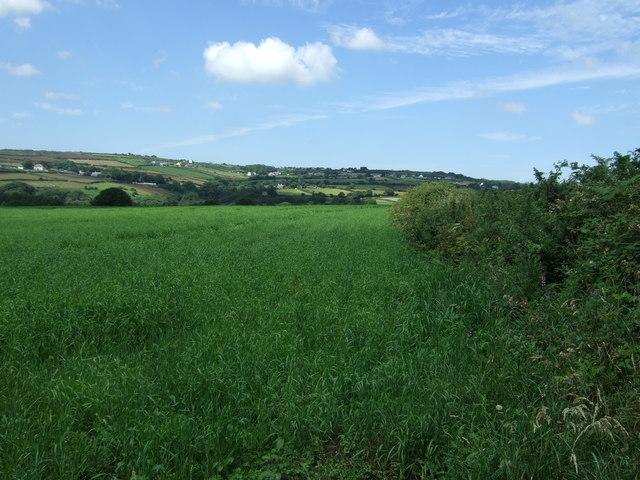 Crop field and hedgerow near Lamanva