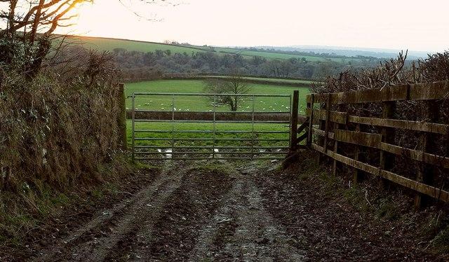 Gate and field near Whitecross