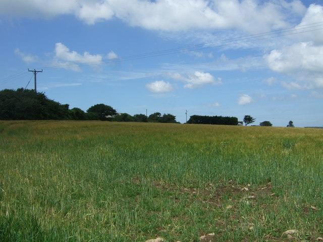 Cereal crop, Kirgilliack