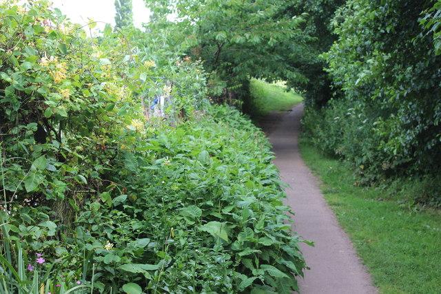 Footpath behind allotments, Glasllwch