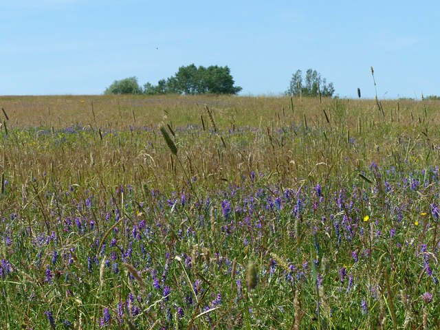 Flower meadow, Shipley Country Park