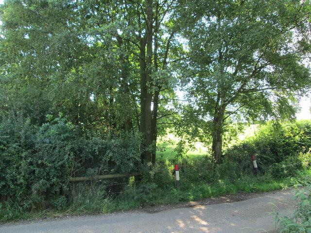 Bandridge Lane and brook, Rushton
