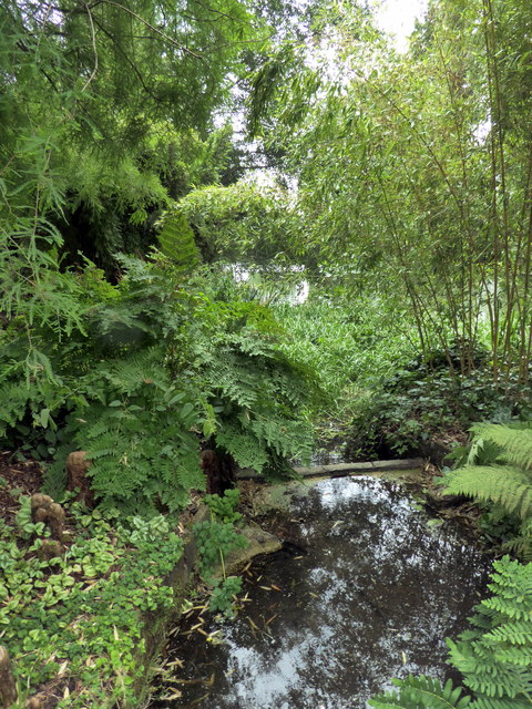Elmstead Brook at Beth Chatto Gardens