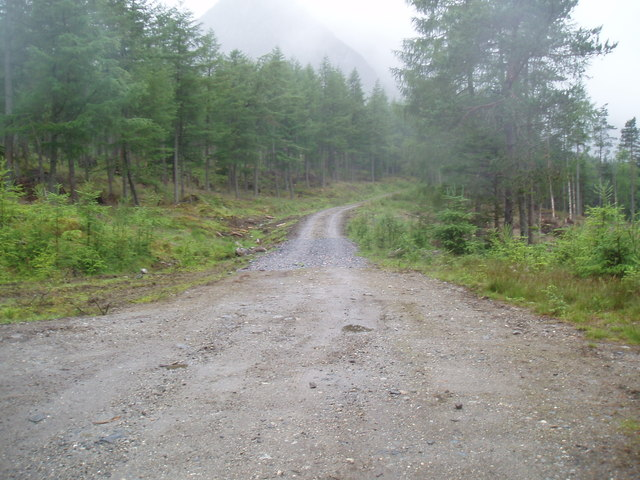 Forestry track in Glen Doll Forest