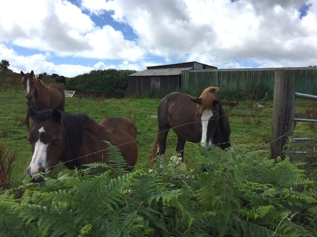 Horses, Paddock and Stables
