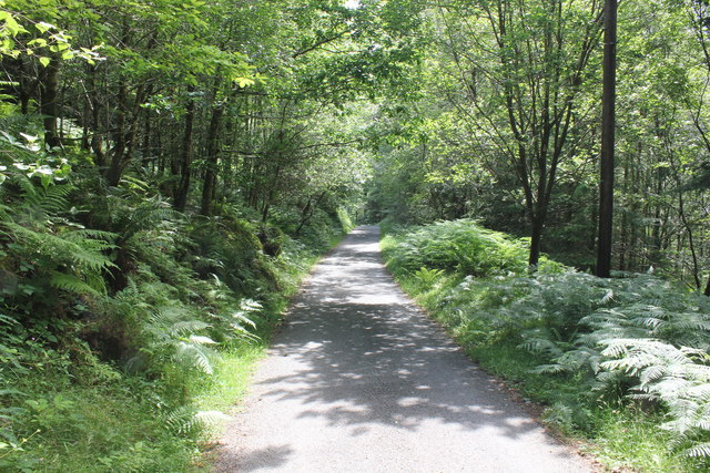 Path and Bike Trail in Coed-y-Brenin