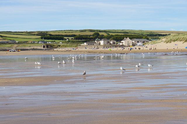 Gulls on the beach at Croyde