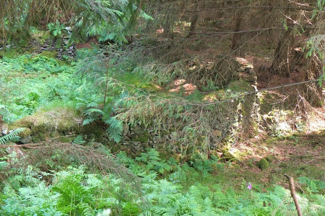 Old sheepfold, Leithenwater Forest