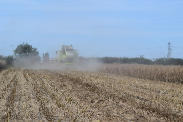Harvesting oilseed rape