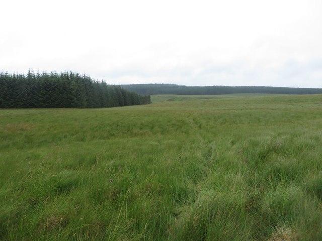 Public bridleway crossing rough grassland