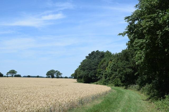Footpath beside Colliersley Wood