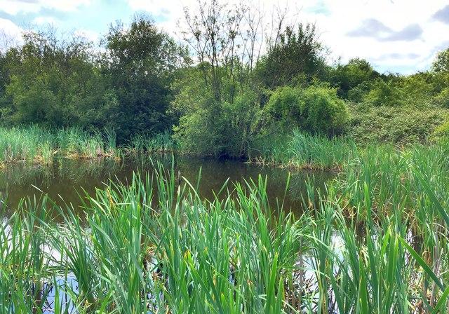 Pond in Elfield Park nature reserve