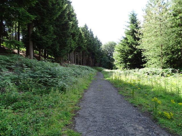 Mill Bank Wood