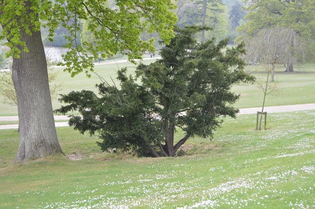 Chalybeate Spring, Dunorlan Park