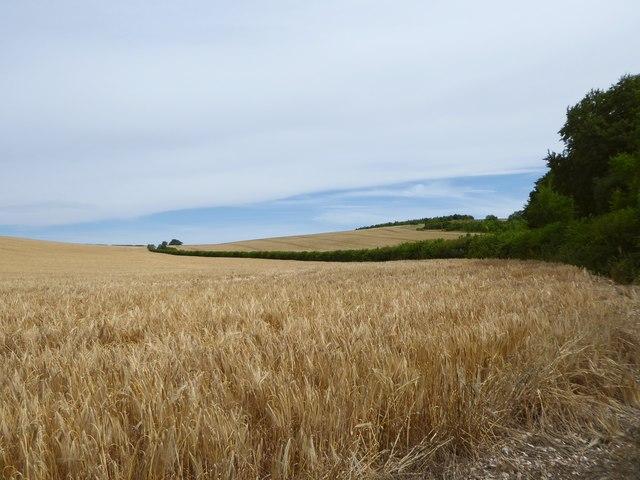Farmland south of East Kennett