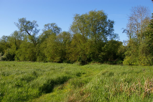 Water meadows by the Cherwell, off the path to New Marston