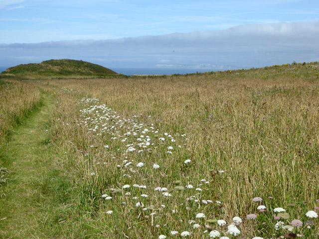 Coastal grassland, Chale